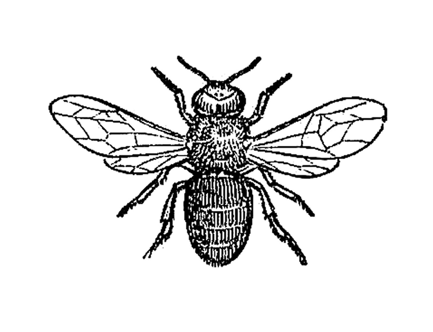 insect coloring pages -