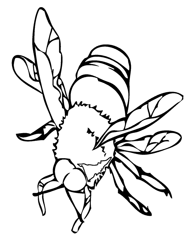 insect coloring pages - bijtml
