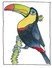 jan brett coloring pages - cloud forest toucan coloring page