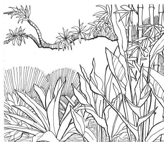 Jungle Coloring Pages - 2o Awesome Jungle Coloring Pages