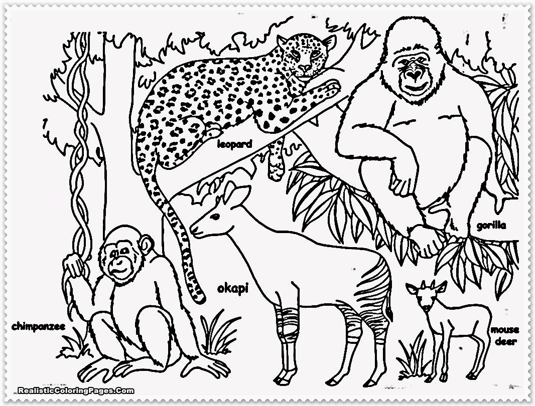 jungle coloring pages - realistic jungle animal coloring pages