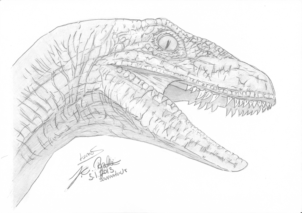 jurassic world coloring pages - Velociraptor head sketch