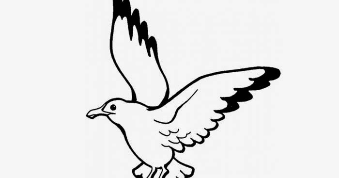 K Coloring Pages - Seagull Coloring Page