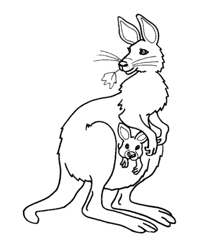kangaroo coloring page - kangaroo coloring pages