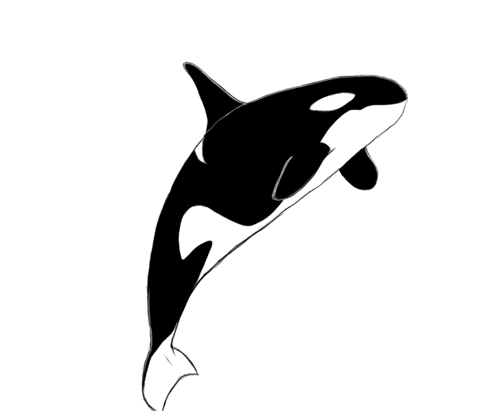 killer whale coloring page - orca drawing
