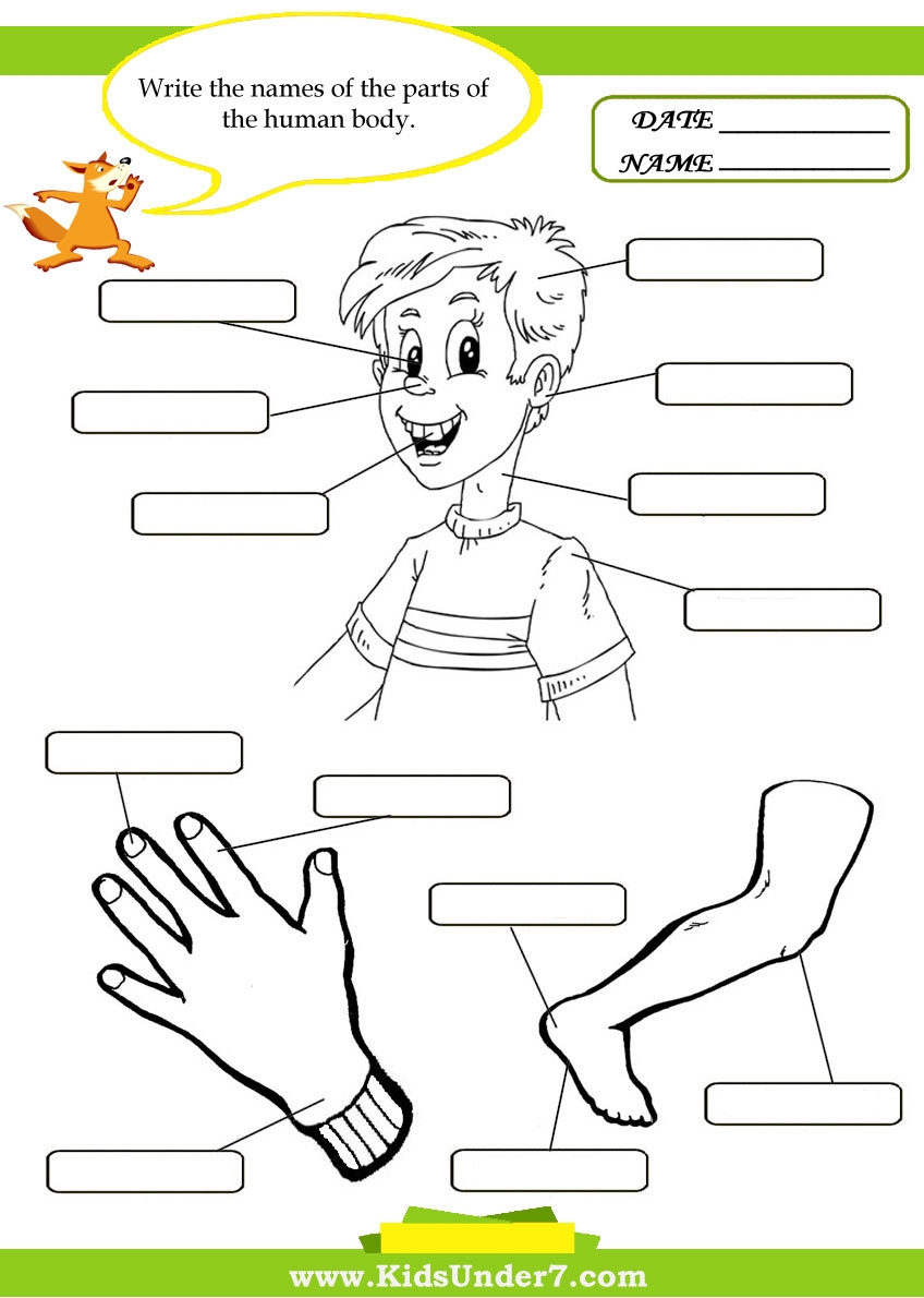 kindergarten coloring pages free - body parts pictures for kindergarten