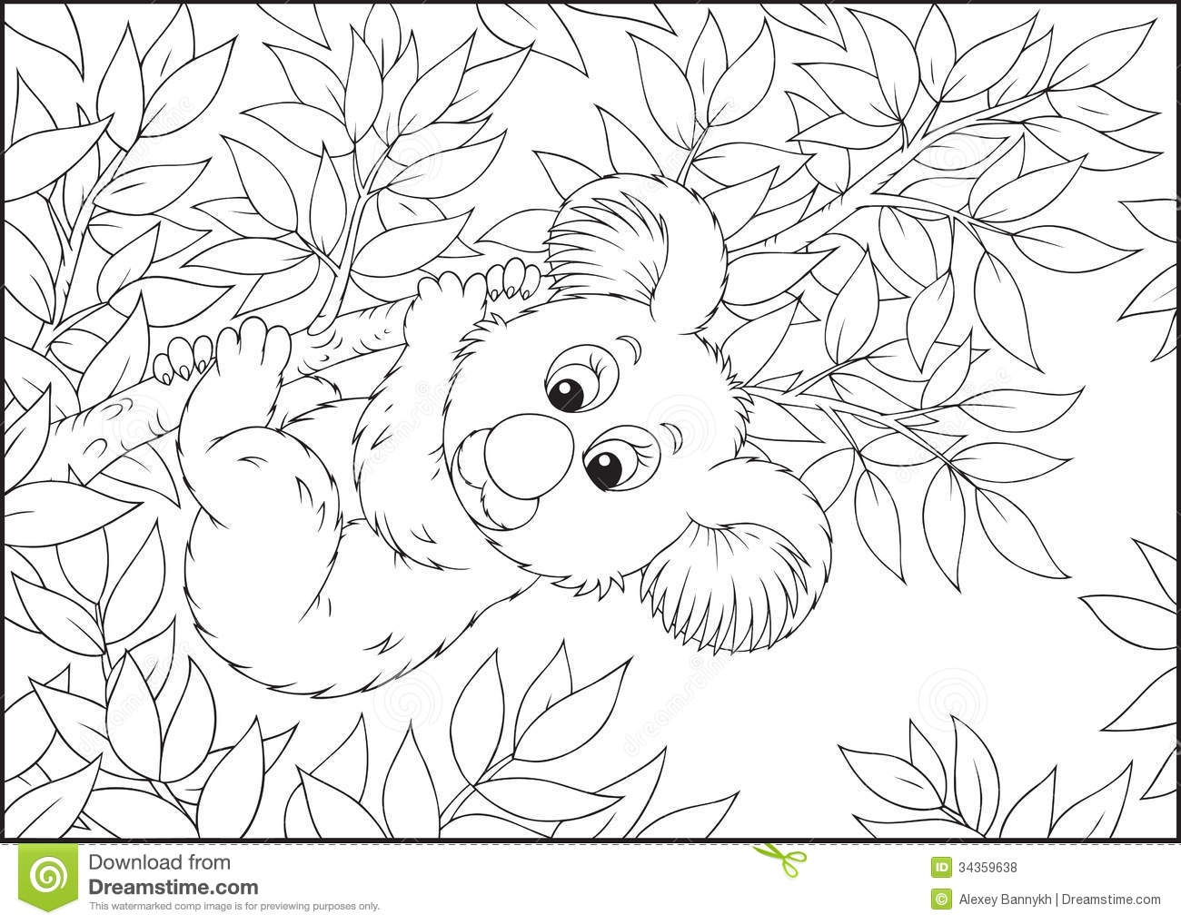 koala bear coloring page - royalty free stock photos koala bear hanging eucalyptus branch black white outline illustration coloring book image