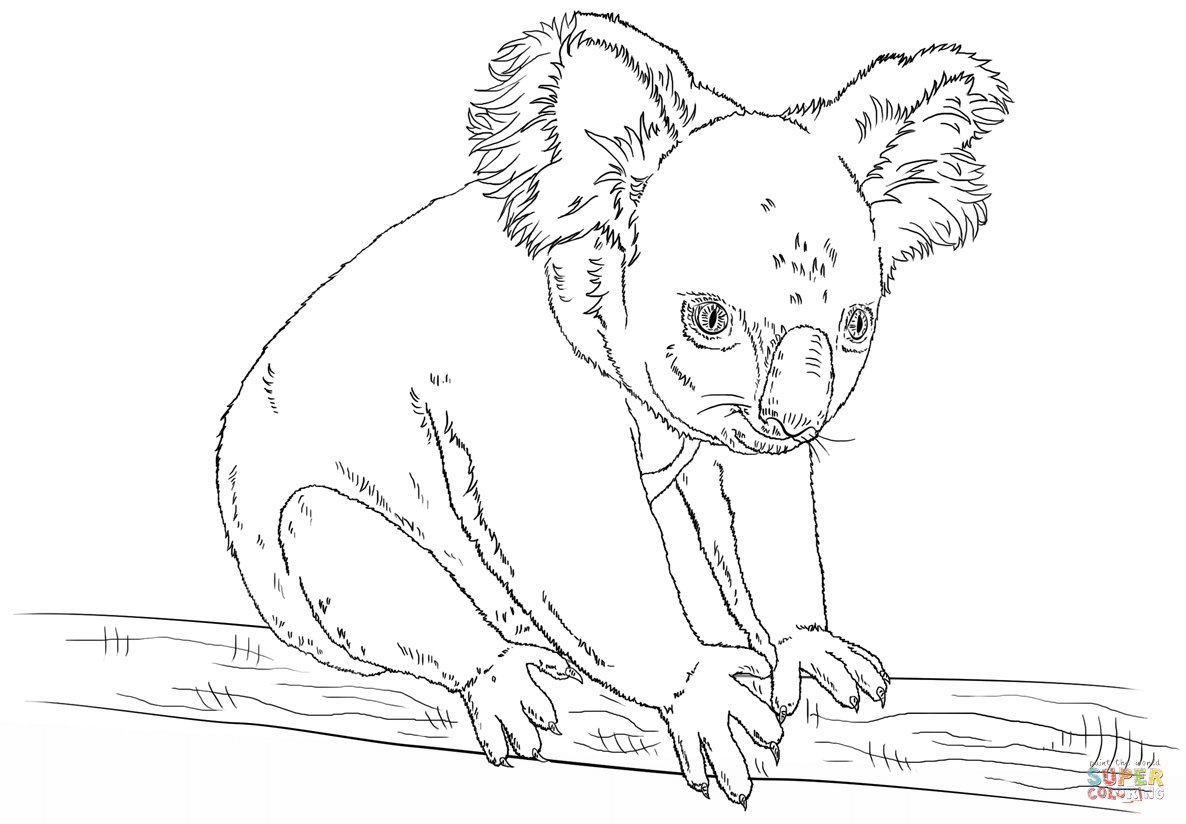 20 Koala Coloring Pages Compilation FREE COLORING PAGES Part 2