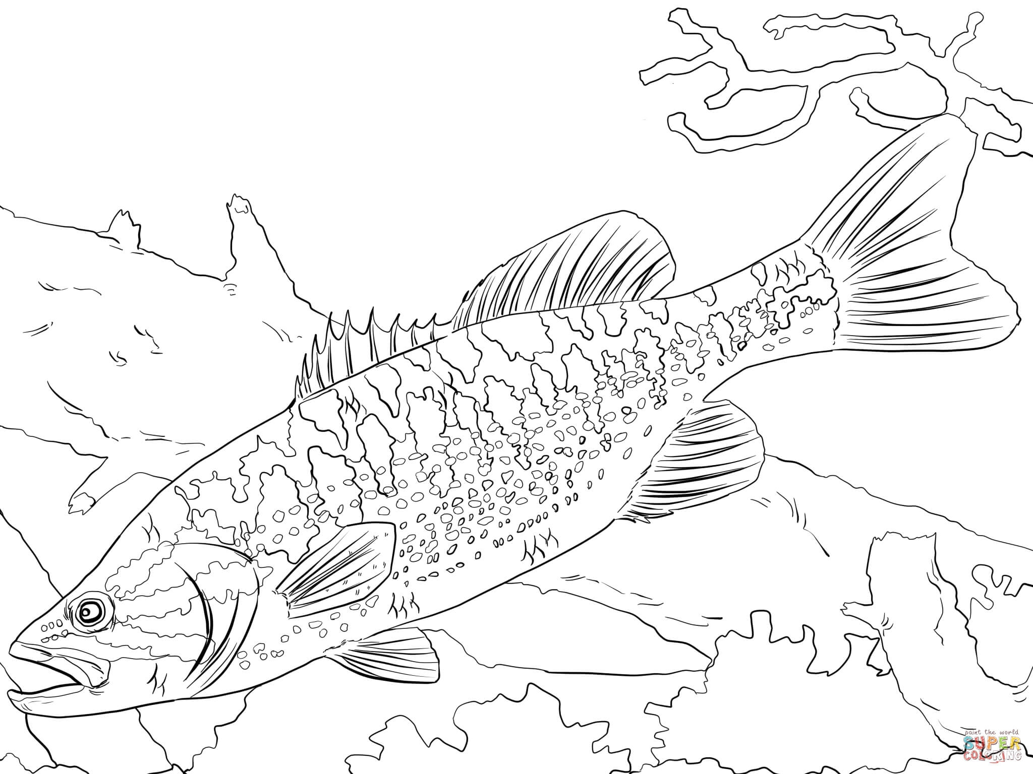 koi fish coloring page - guadalupe bass