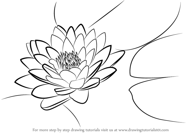 koi fish coloring page - how to draw lily pad