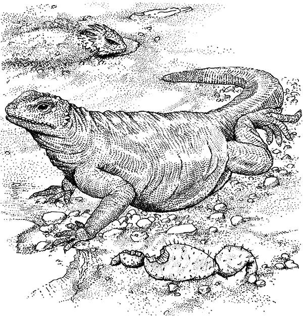 komodo dragon coloring page - art edu colouring pages