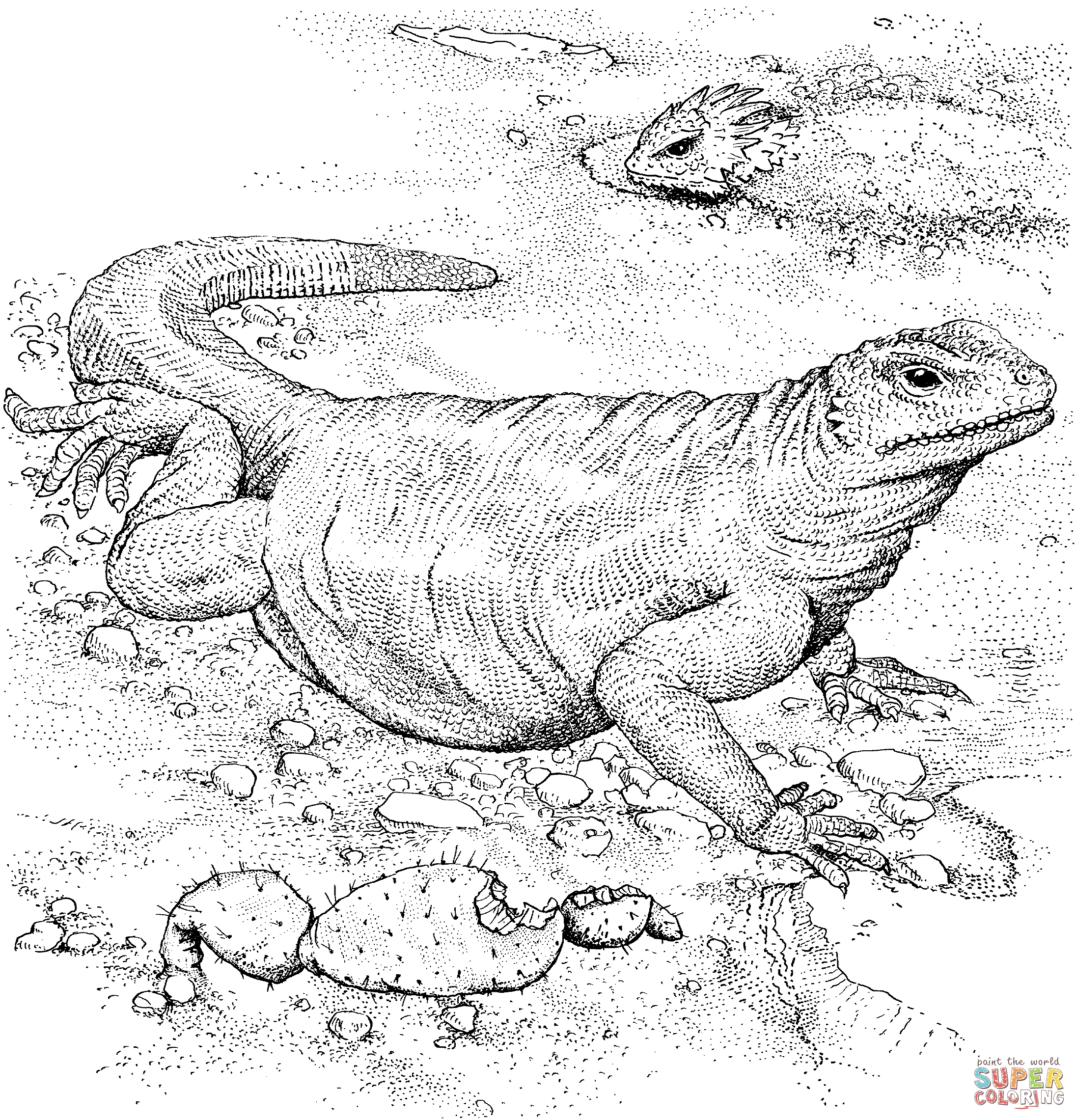komodo dragon coloring page - komodo dragon