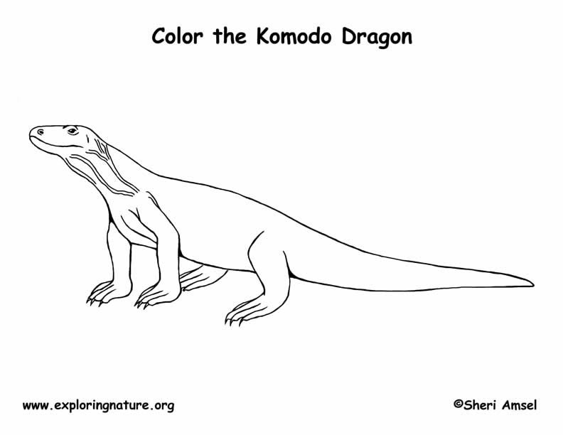 komodo dragon coloring page - 2827