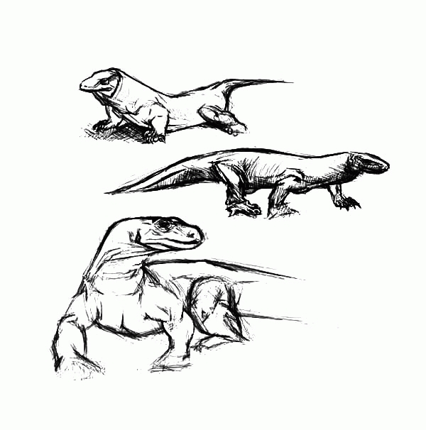 komodo dragon coloring page - komodo dragon coloring pages