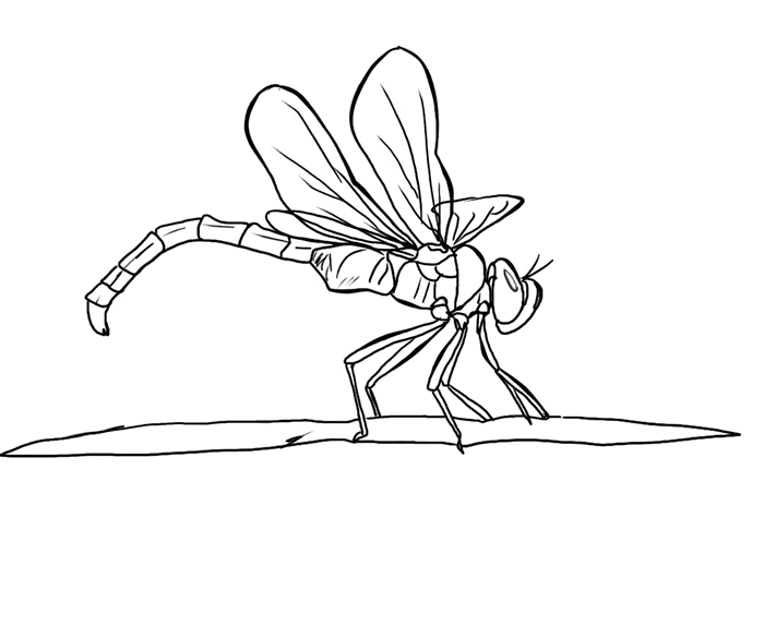 l coloring pages - 19 free dragonfly coloring page