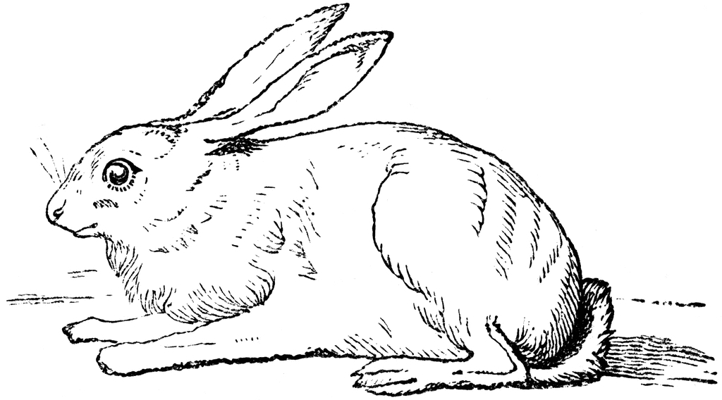 large coloring pages - hare