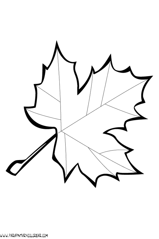 24 Leaf Coloring Pages Pictures | FREE COLORING PAGES