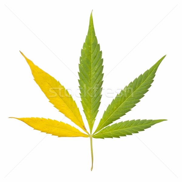 leaf coloring pages - q=hojas de marihuana