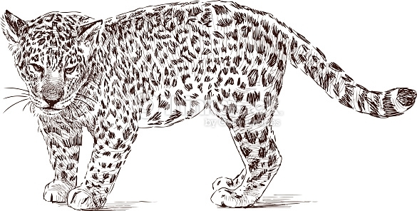 Leopard Coloring Pages