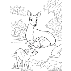leopard coloring pages - deer coloring pages