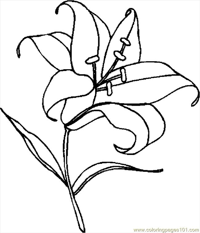 lily coloring pages - easter lily 5
