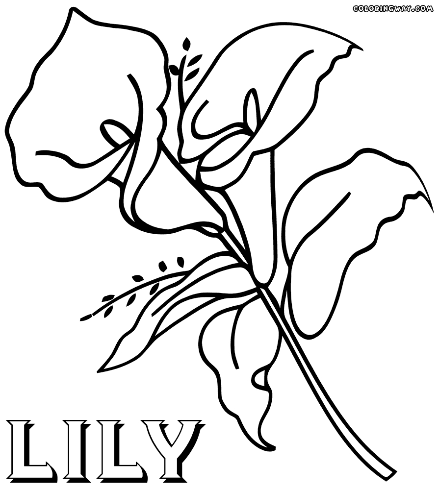 lily coloring pages - lily coloring pages