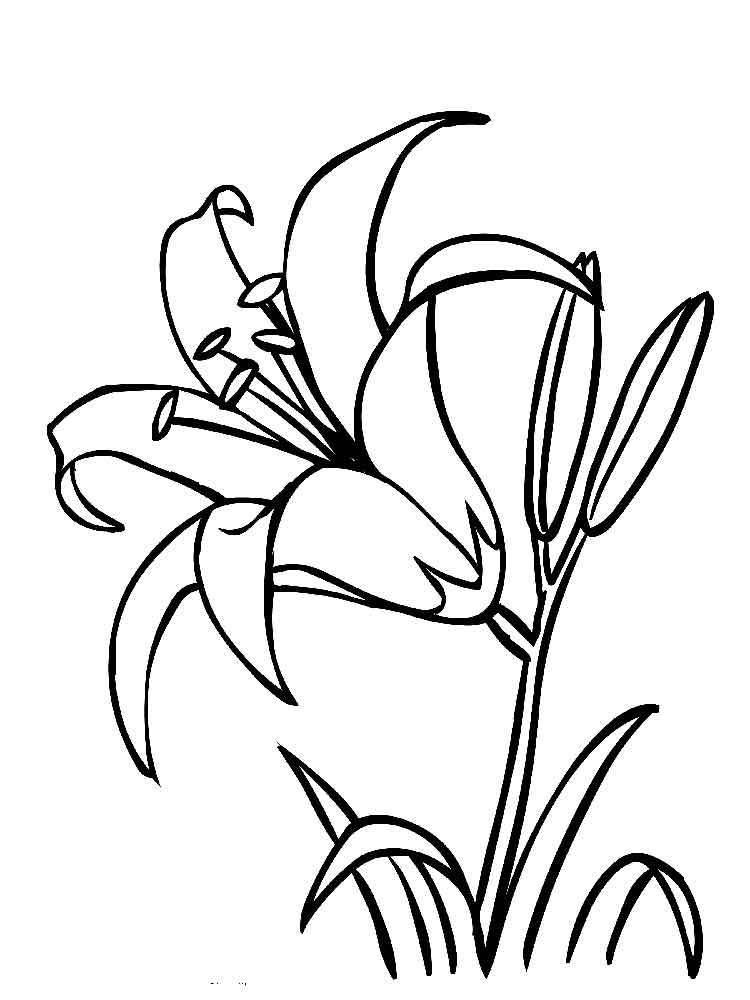 lily coloring pages - lily flower coloring pages