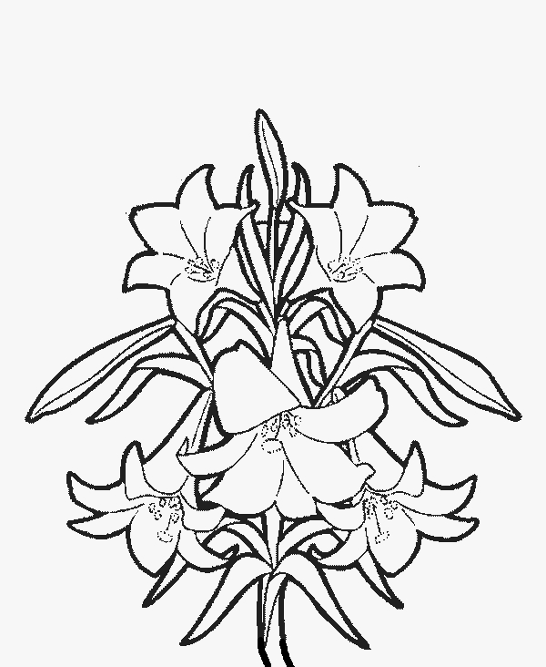 20 Lily Coloring Pages Printable FREE COLORING PAGES Part 3