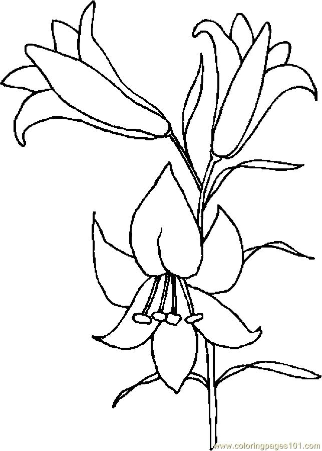 lily coloring pages - r=lily flower