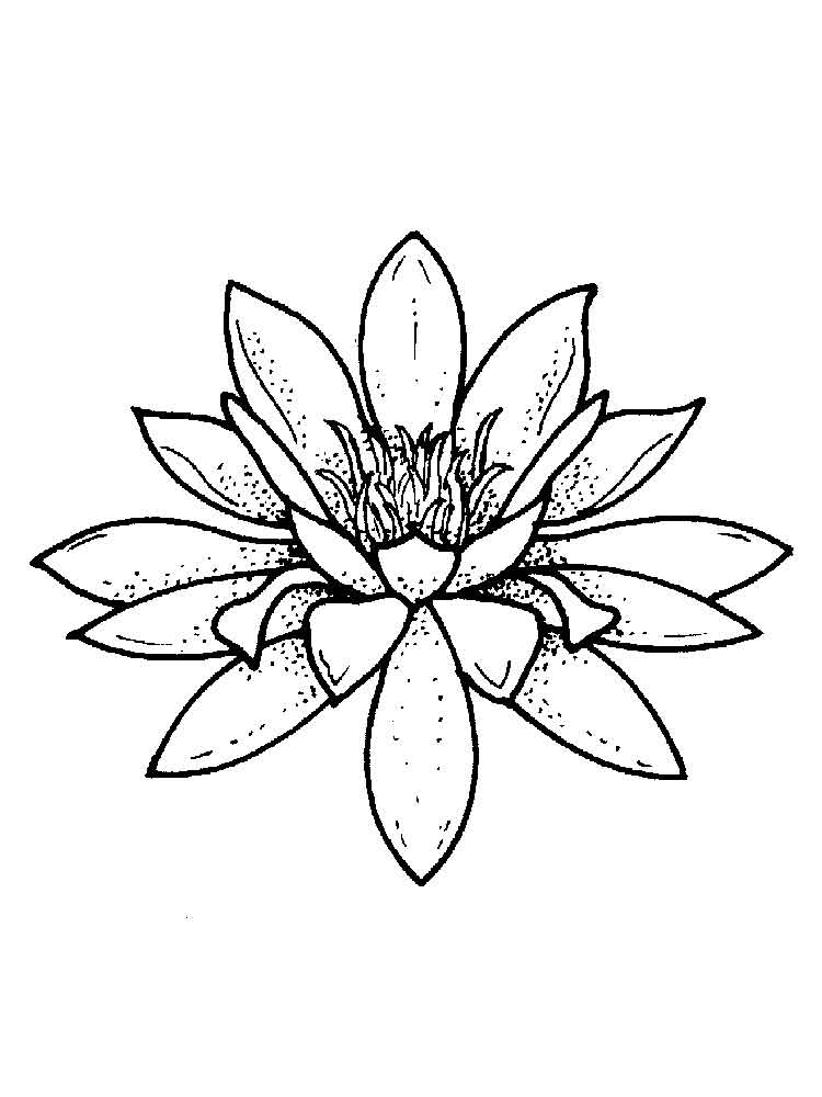 Lily Coloring Pages - Water Lily Coloring Pages Download and Print Water Lily