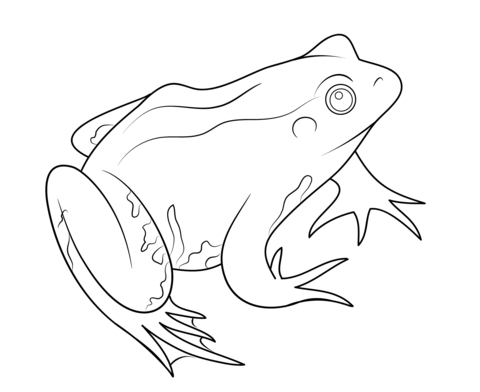 lily pad coloring page - grenouille 1