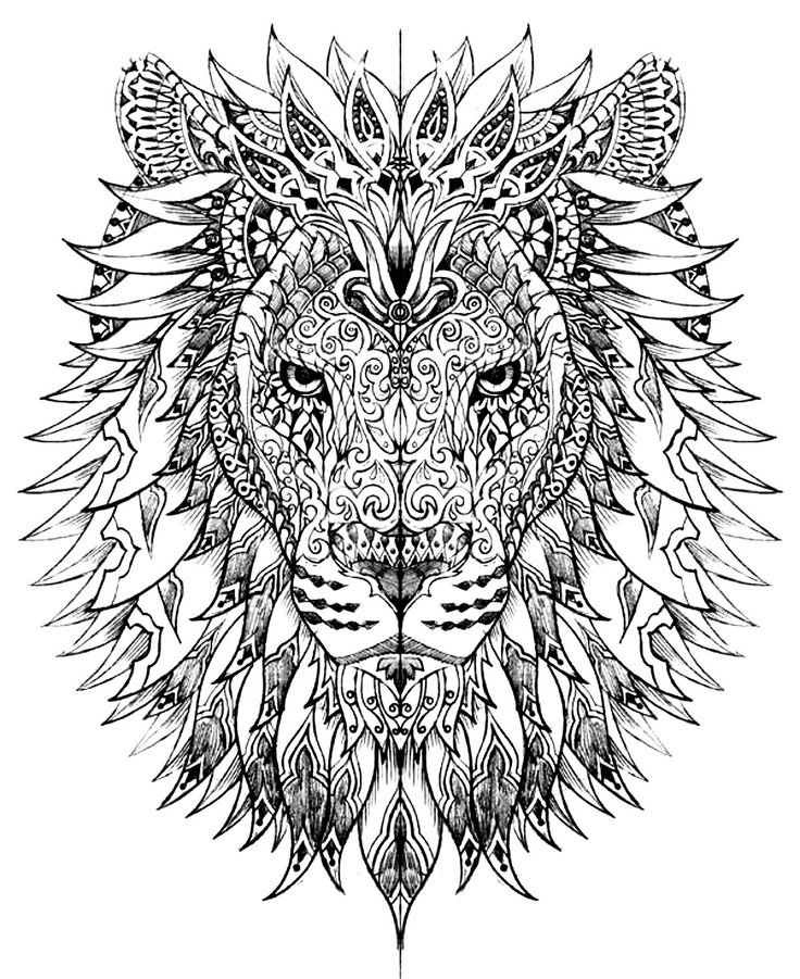 lion coloring pages for adults - 3788