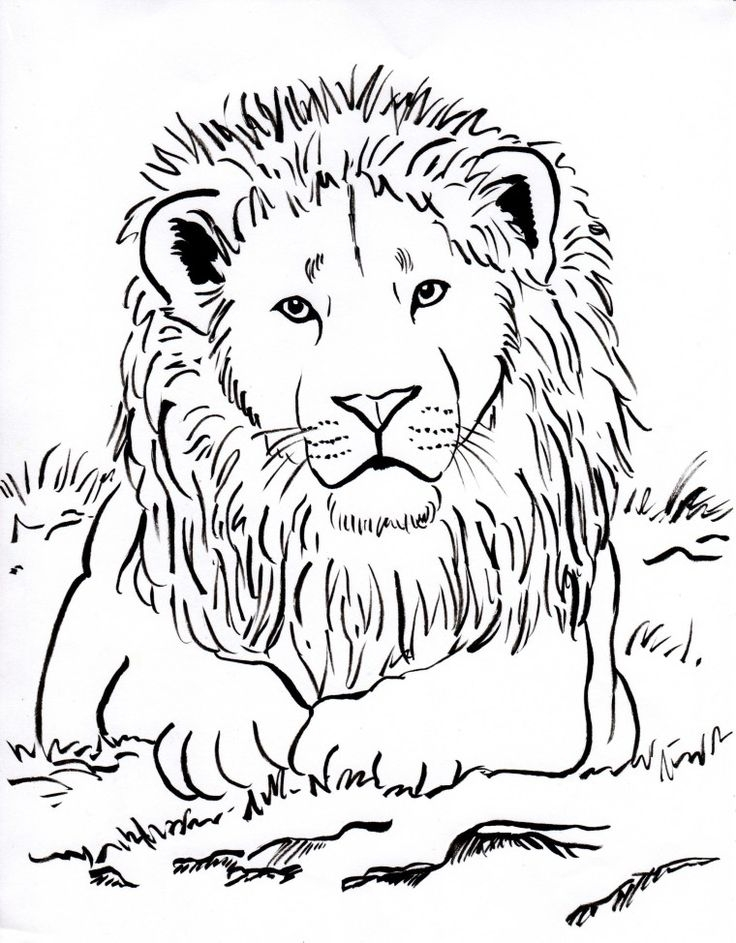 Lion Coloring Pages for Adults - the 25 Best Lion Coloring Pages Ideas On Pinterest