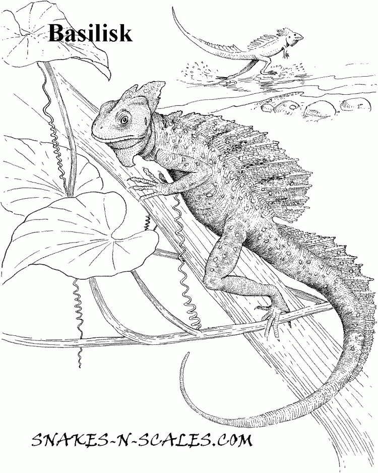 25 Lizard Coloring Pages Compilation | FREE COLORING PAGES ...