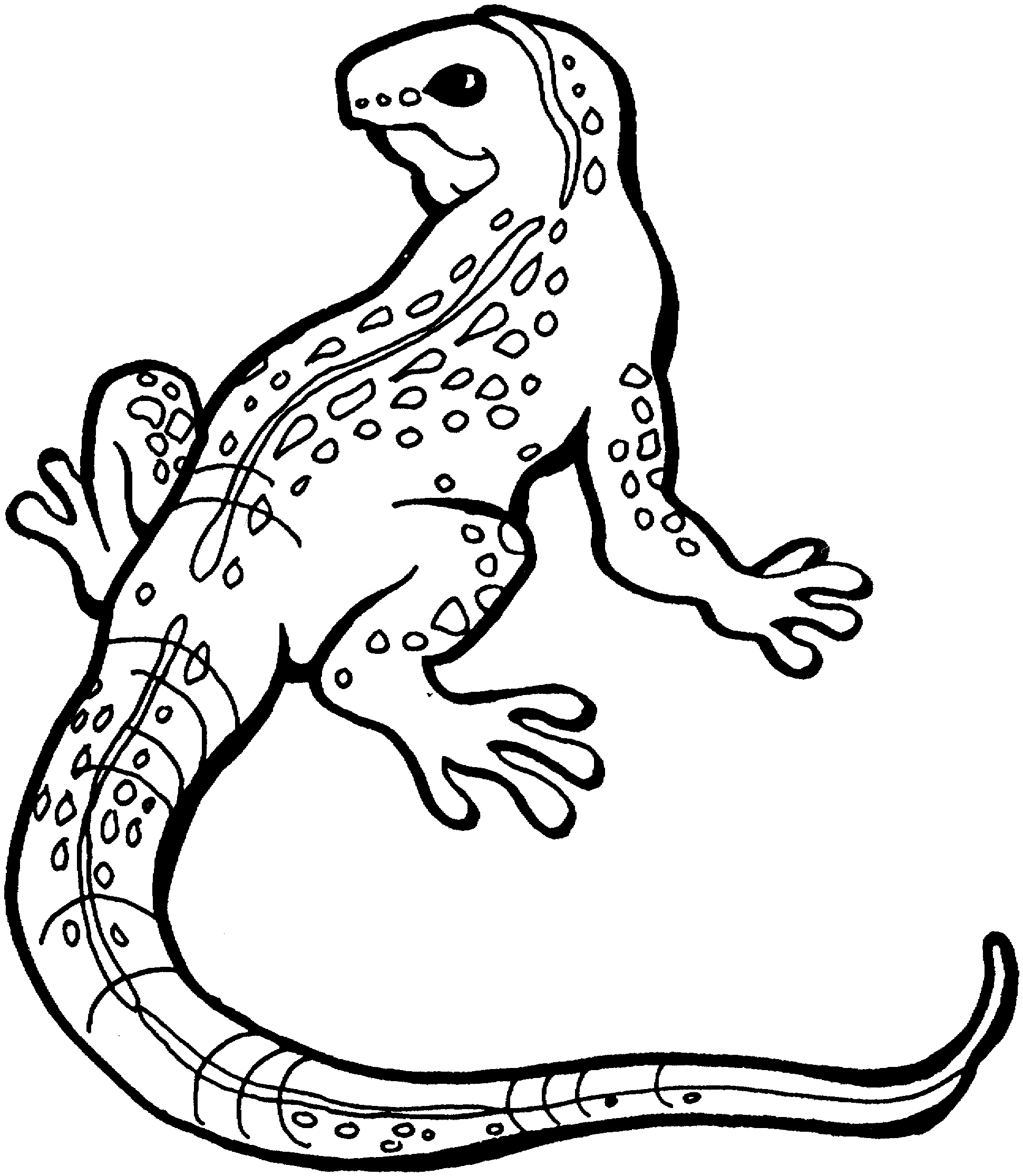 lizard coloring pages lizard coloring pages - Lizard Coloring Pages 2