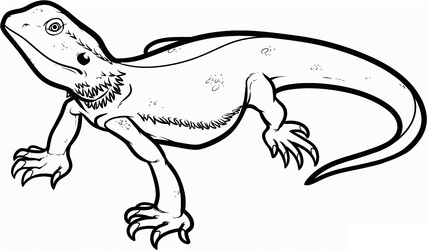 Lizard Coloring Pages - Free Printable Lizard Coloring Pages for Kids