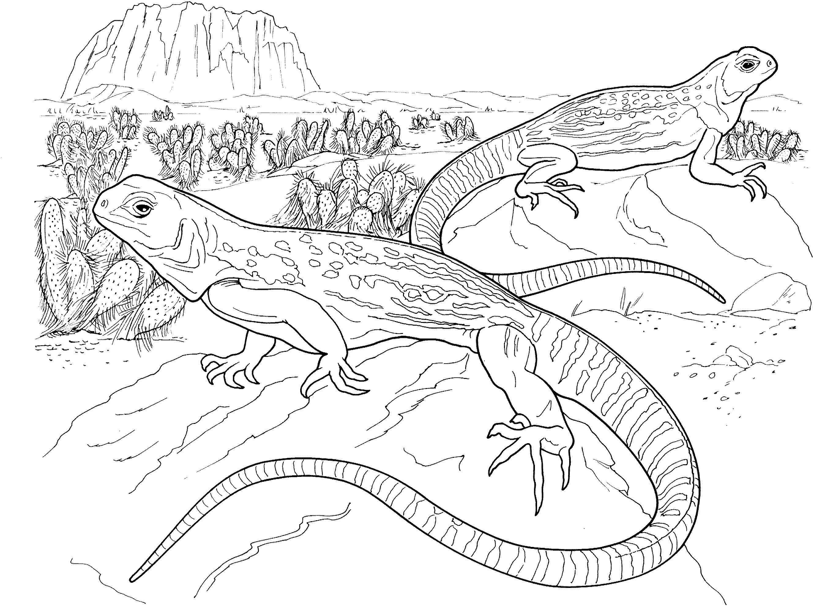 25 Lizard Coloring Pages Compilation | FREE COLORING PAGES - Part 3