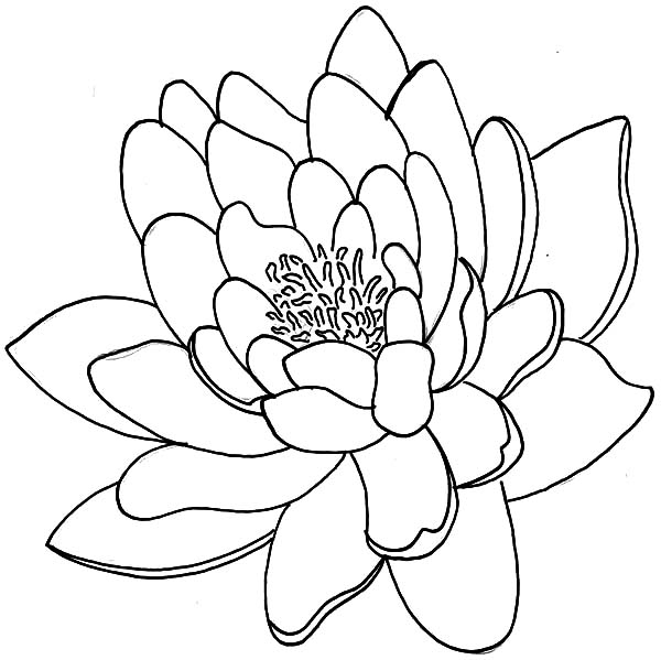 25 Lotus Flower Coloring Page Images Free Coloring Pages Part 3