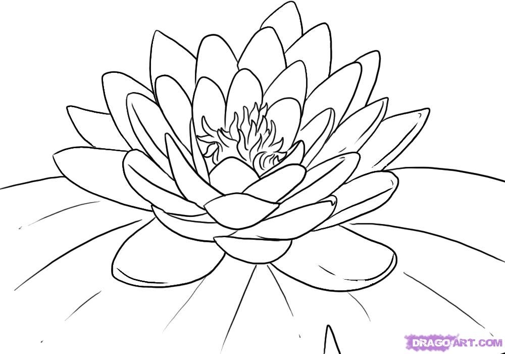 lotus flower coloring page - lotus flower coloring pages for kids