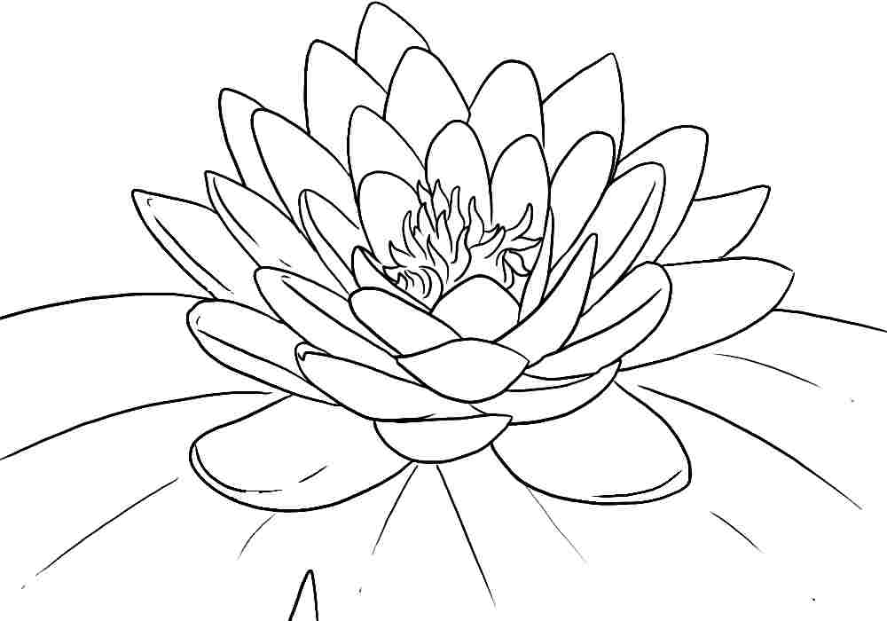 lotus flower coloring page - lotus coloring pages