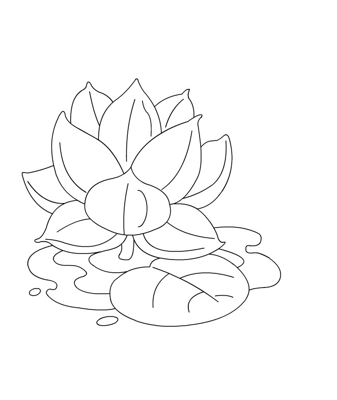 lotus coloring pages for adults - Ecosia