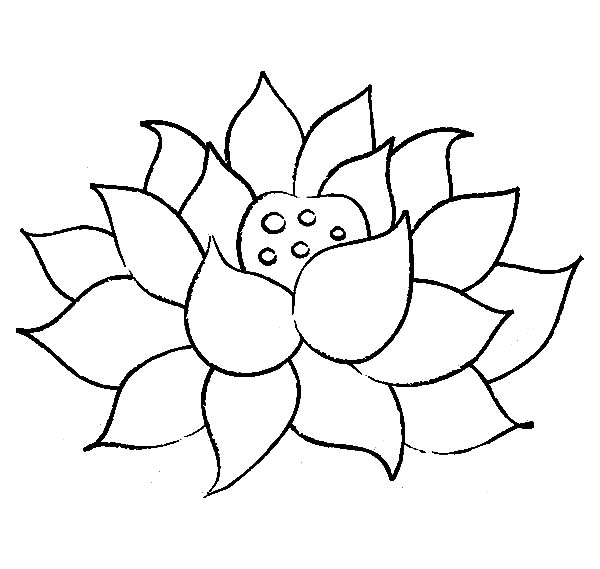 25 lotus flower coloring page images free coloring pages for Lotus flower coloring pages free