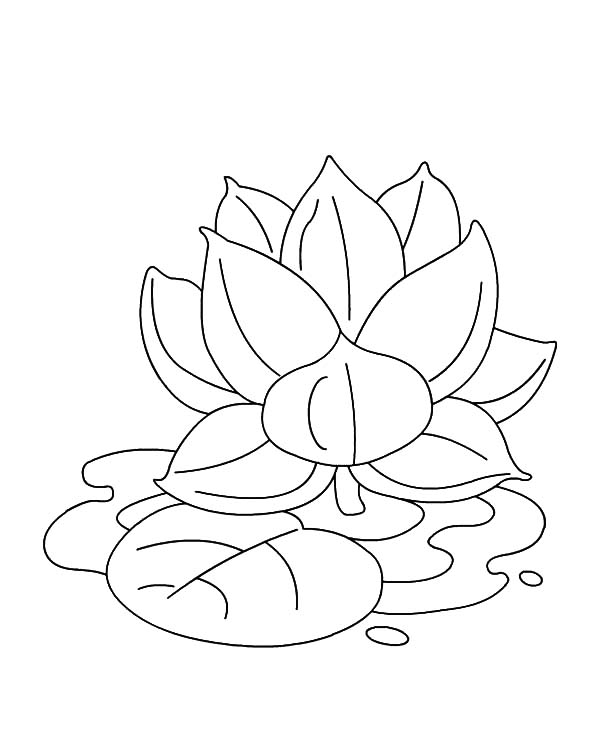 lotus flower coloring page - indian lotus flower coloring pages