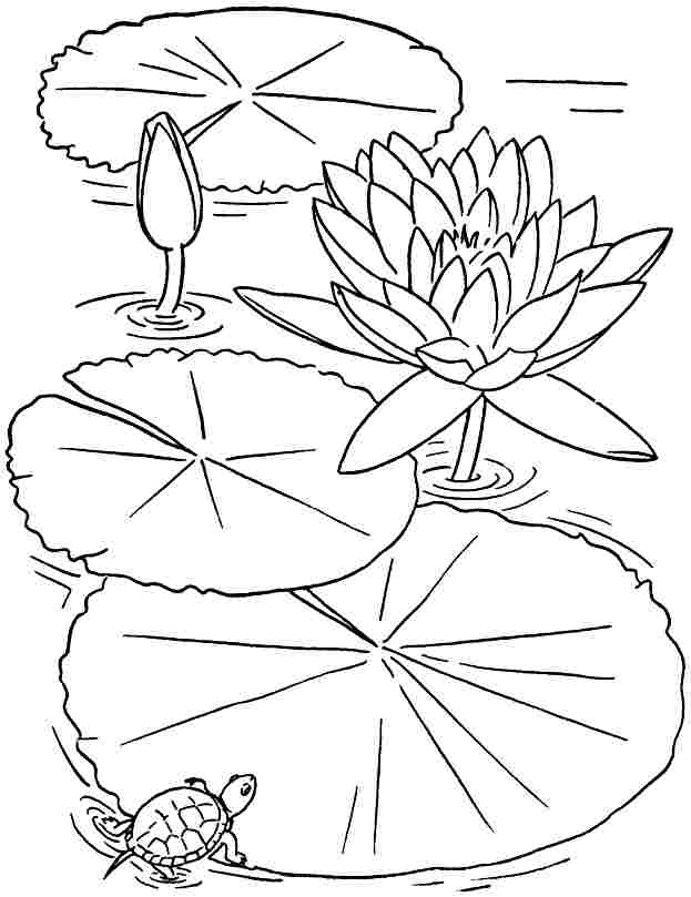 lotus flower coloring page - printable coloring pages lotus flowers