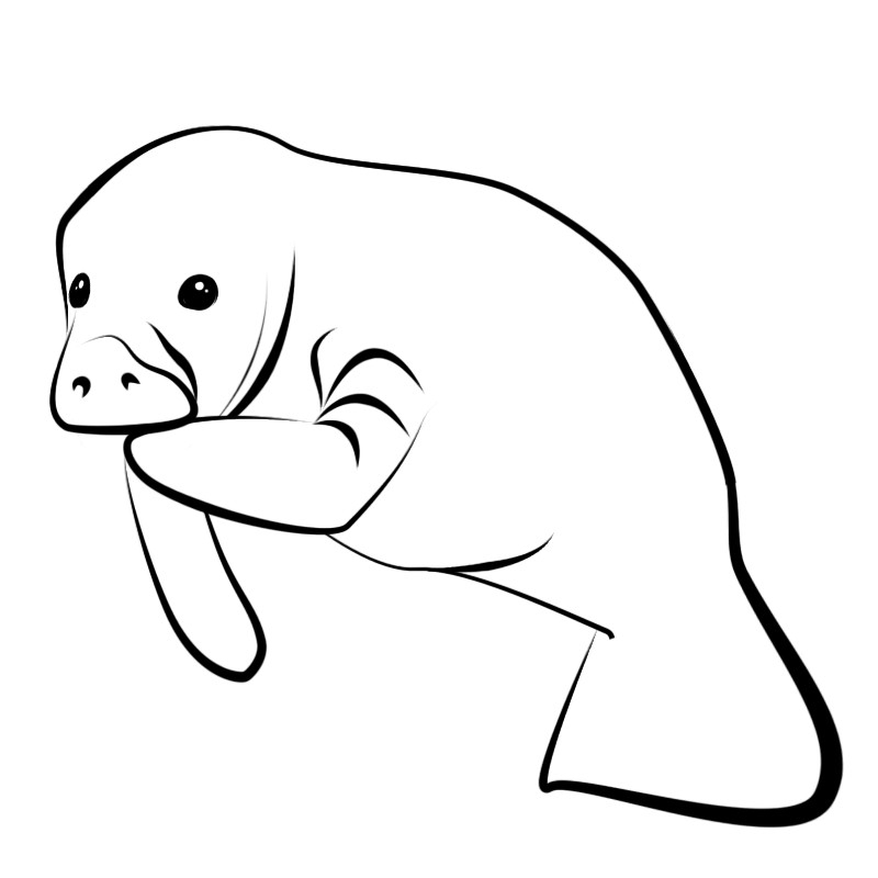 manatee coloring page - free clipart manatee clip art