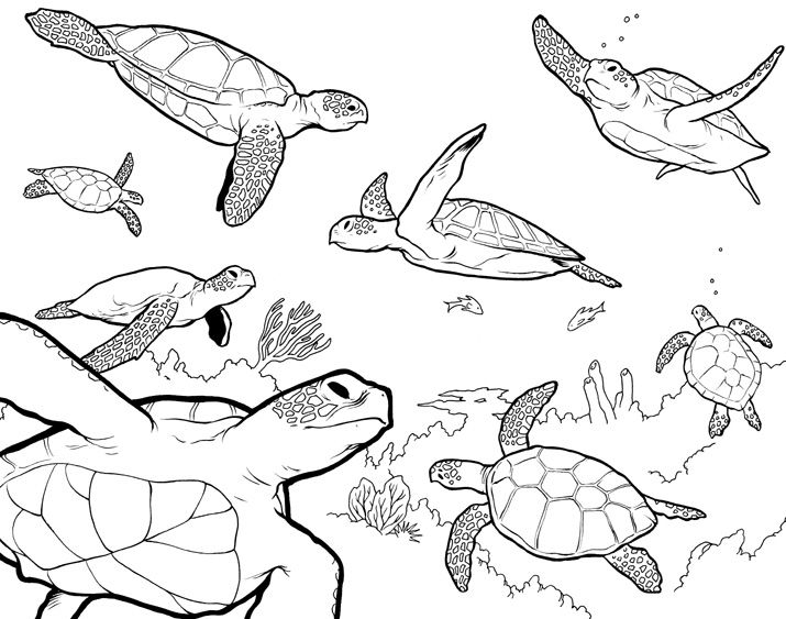 manatee coloring page -