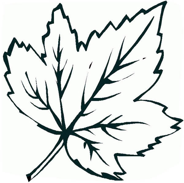 maple leaf coloring page - q=maple leaves