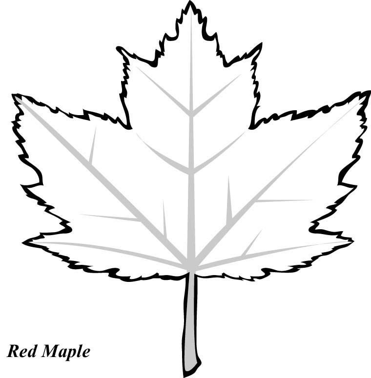 Maple Leaf Coloring Page - Maple Leaf Coloring Pages Bestofcoloring