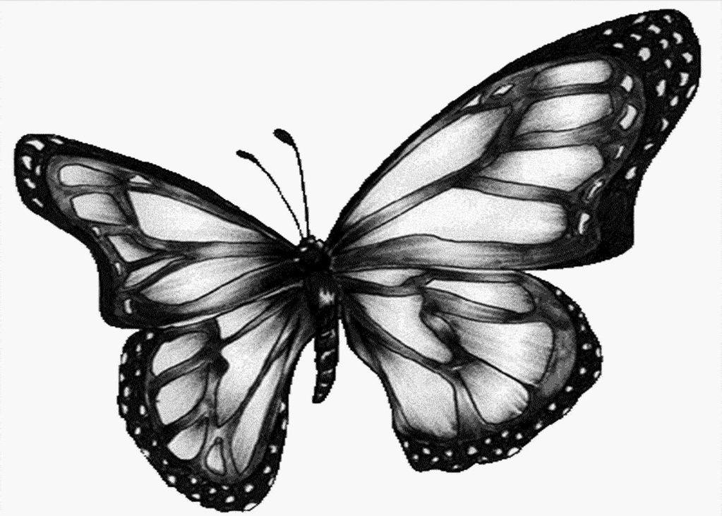 monarch butterfly coloring page - butterfly images black and white