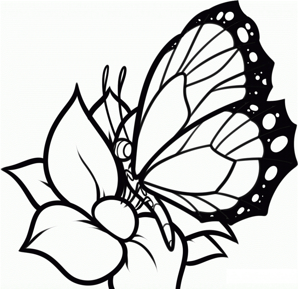 monarch butterfly coloring page - butterfly coloring pages